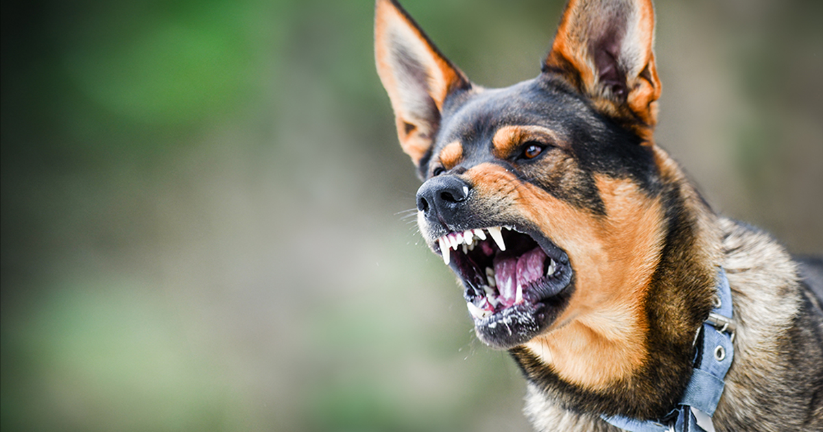 Dog Bite Injuries Expected to Rise As Restrictions are Lifted